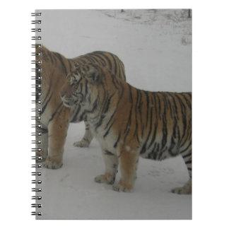 Alquileres dos tigres siberianos cuaderno