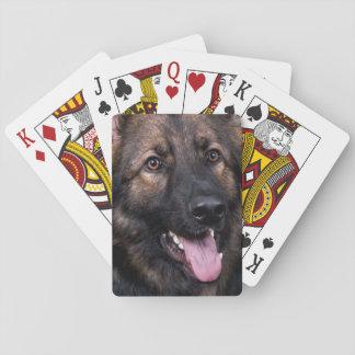 Alsatian del perro de pastor alemán de los naipes