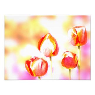 Alto cuarteto rojo dominante de la flor del foto
