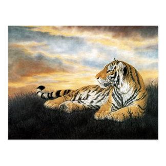 Amanecer del tigre postal