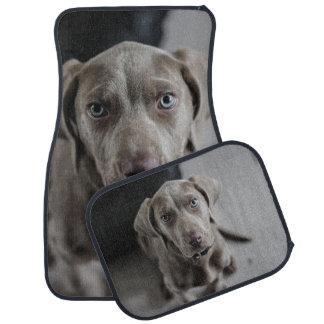 Amante de la raza del perro de Weimaraner Alfombrilla De Coche