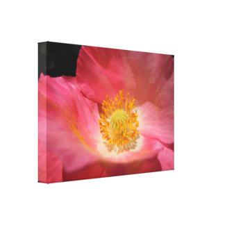 Amapola coloreada rosa polvoriento lienzo