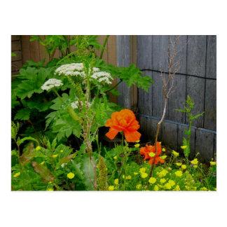 Amapola oriental anaranjada entre malas hierbas tarjeta postal