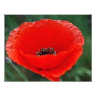 Amapola roja y significado invitaciones personalizada