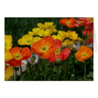 Amapolas coloridas tarjeta de felicitación