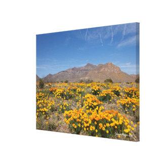 Amapolas de El Paso