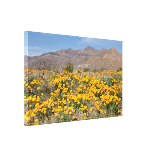 Amapolas de El Paso Impresión En Lona Estirada