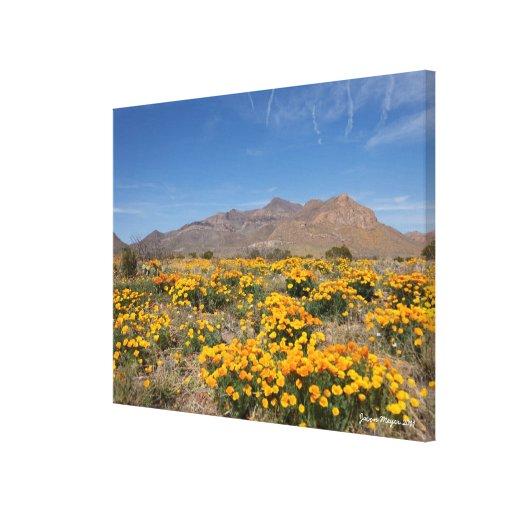 Amapolas de El Paso Lienzo Envuelto Para Galerías