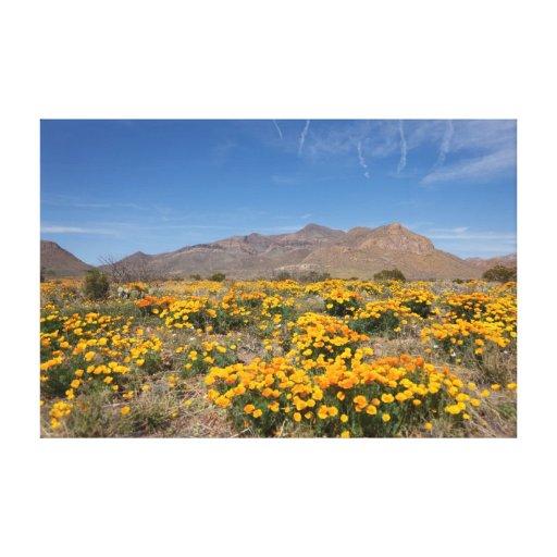 Amapolas de El Paso Impresiones En Lona