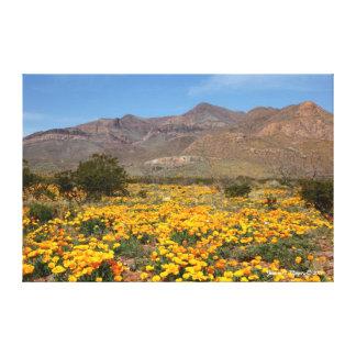 Amapolas de El Paso Lienzo Envuelto Para Galerias
