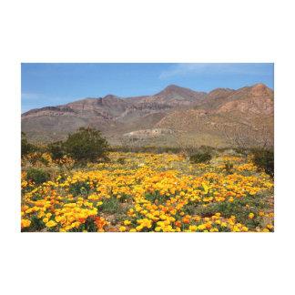 Amapolas de El Paso Lona Envuelta Para Galerías