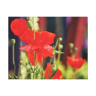 Amapolas hermosas del rojo de la foto del primer lienzo