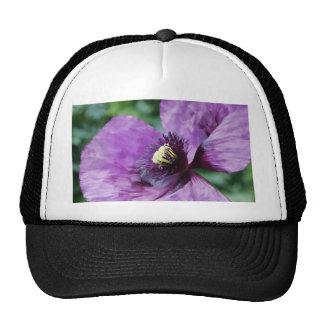 Amapolas púrpuras/violeta gorras de camionero