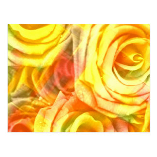 amarillo a cuadros de los rosas postal