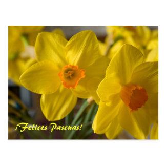 ¡¡Amarillo Felices Pascuas de los narcisos!  Postal