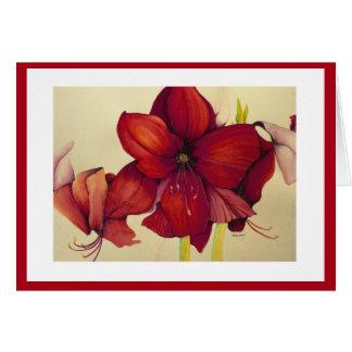 Amaryllis rojo del navidad que pinta la tarjeta
