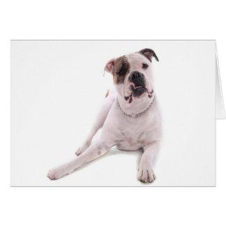 american bulldog tarjeta de felicitación