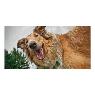 Amiga el collie sonriente tarjetas fotograficas personalizadas