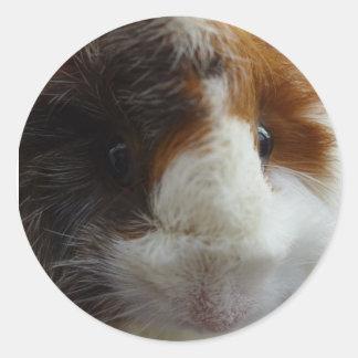 Amigo del conejillo de Indias de Pixle Pegatina Redonda