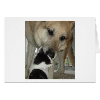 Amigo del pastor alemán y del gatito tarjeta de felicitación