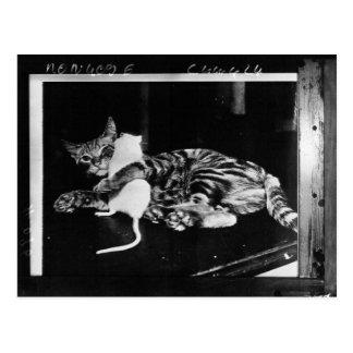 Amistad asombrosamente - gato Minnie y ratón de Postal