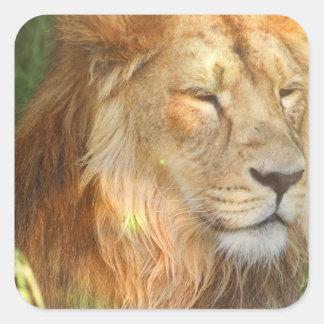 Amo a los pegatinas de los leones calcomanía cuadradase