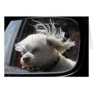 Amo el viento y la lluvia en mi pelo… tarjeta