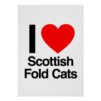 amo gatos del doblez del escocés impresiones