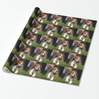 Amor adolescente del beagle papel de regalo