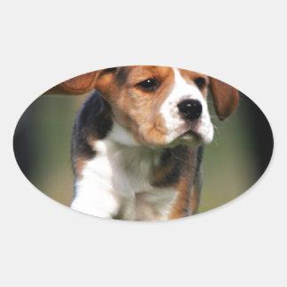 Amor adolescente del beagle pegatina ovalada