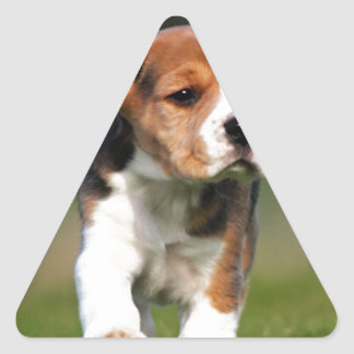 Amor adolescente del beagle pegatina triangular