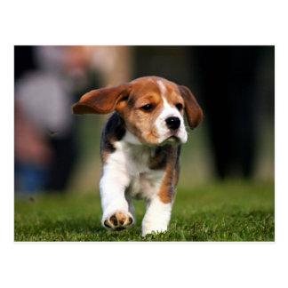 Amor adolescente del beagle postal