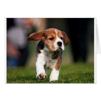 Amor adolescente del beagle tarjeta de felicitación