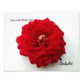 Amor con rojo de la dalia foto