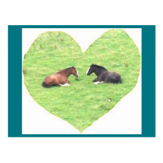 Amor del caballo de la postal 5 de la foto -
