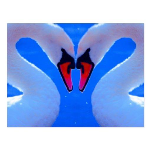 Amor del cisne, cuellos en forma de corazón postal
