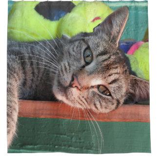 Amor del gato cortina de baño
