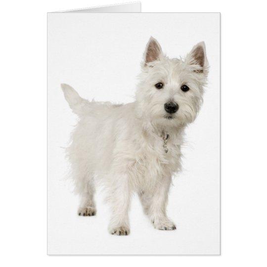 Amor del oeste blanco del perro de perrito de tarjeta pequeña
