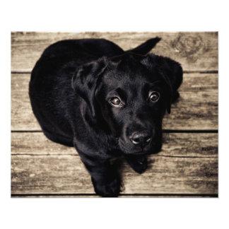 Amor del perro de perrito impresiones fotograficas