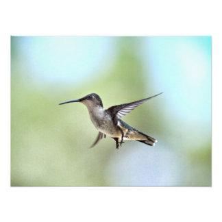 Ampliación de la foto del colibrí