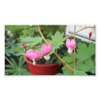 Ampliación de la foto - vid floral rosada