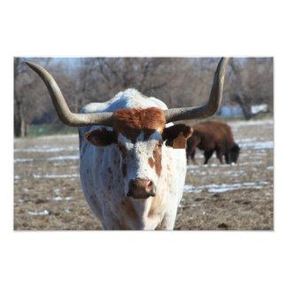 Ampliación larga de la foto de la vaca del cuerno