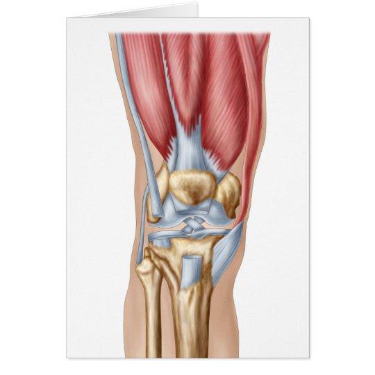 Anatomía de la junta de rodilla humana tarjeta de felicitación