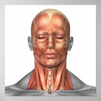 Anatomía de los músculos del rostro humano y del póster
