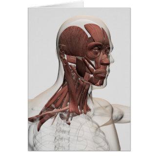 Anatomía de los músculos masculinos del Facial y Tarjeta De Felicitación