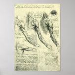 Anatomía del brazo y del hombro de Leonardo da Póster