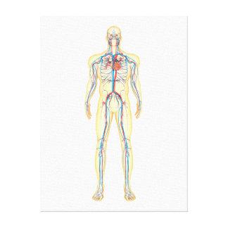 Anatomía del cuerpo humano y del sistema impresión en lona estirada