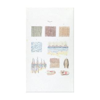 Anatomía del vintage de la piel y de los clavos lienzo