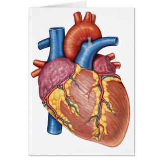 Anatomía gruesa del corazón humano tarjeta de felicitación