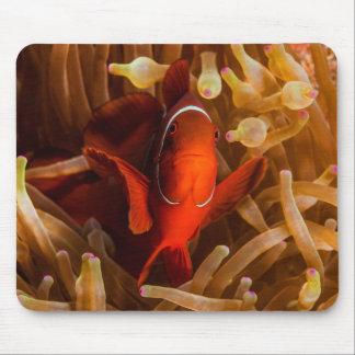Anémona Clownfish la gran barrera de coral de Alfombrilla De Ratón